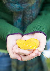 Close up of a woman's hands holding a leaf