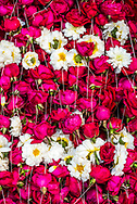 Flowers for offering at a Hindu temple, New Delhi, India