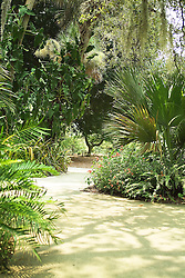 Selby Botanical gardens in Sarasota Florida