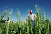 CALGARY, AB: July 17, 2011 -- Wheat farmer Jeff Nielsen an elected director of the Canada Wheat Board on his farm near Olds, Alberta, July 17, 2011.<br /> <br /> (Todd Korol for National Post)<br /> <br /> (For story by Claudia Cattanio)