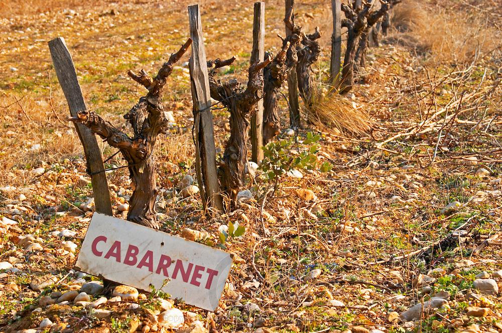 Cabernet Sauvignon misspelled Cabarnet vines in a row and a sign at La Truffe de Ventoux truffle farm, Vaucluse, Rhone, Provence, France