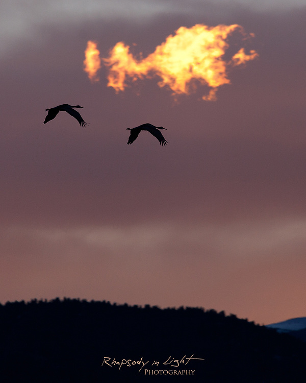 The sun sets a small cloud ablaze from beyond the horizon as a pair of cranes fly past.