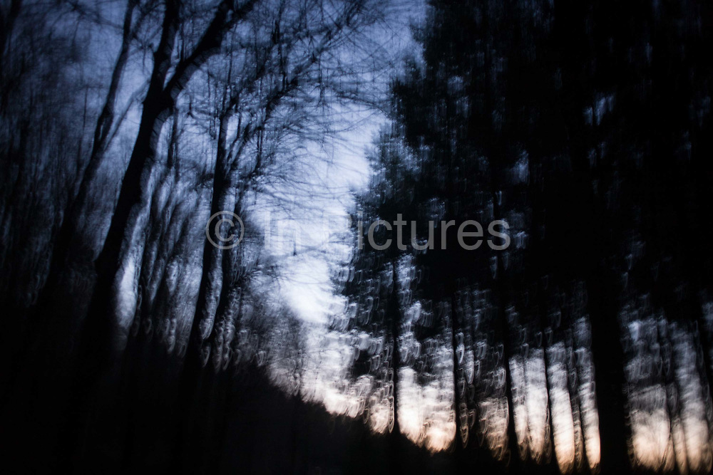 Blurred movement and winter afternoon trees in north Somerset forest land. Walking through the darkening woodland, late on a cold December afternoon, the fading sky is seen through the bare branches of evergreen trees. As we move through the land, our movement blurs to give a ghostly effect, a disturbing atmosphere and mood that might suit the story of a crime novel where fear is prevalent to the explorer of this sinister landscape.