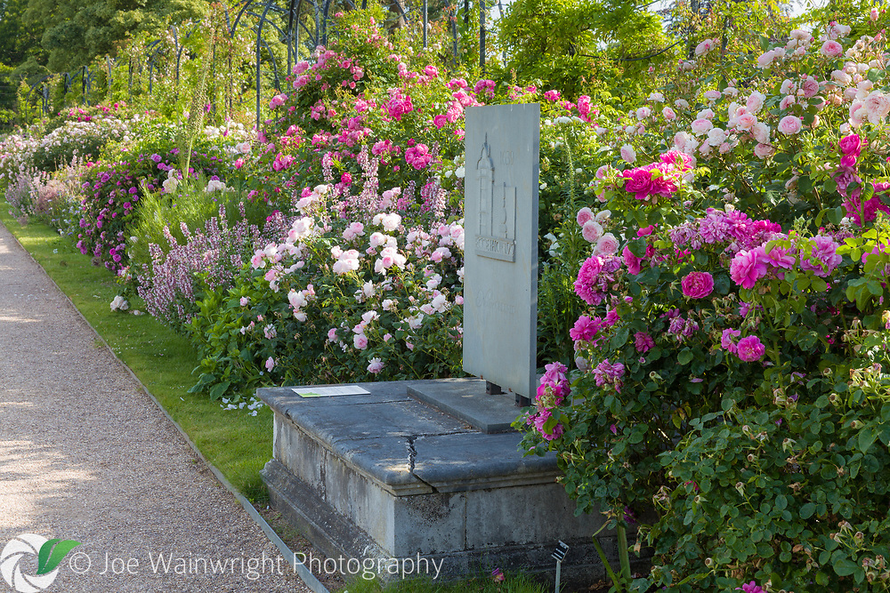 The David Austin Rose Border runs along The Trellis Walk. It includes a shrub roses chosen for their beautiful flowers as well as  fragrance and reliability. Most are  David Austin's English Roses together with with  Old Roses and Hybrid Musks. <br /> The border was designed by Michael Marriott of David Austin Roses. This image is available for sale for editorial purposes, please contact me for more information.