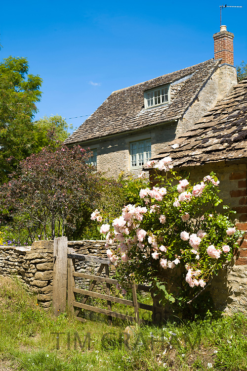 Quaint traditional country cottage with pink roses in the rural village of Kelmscott in The Cotswolds, West Oxfordshire, UK