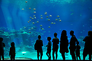 Israel, Eilat, The underwater observatory Built over a coral reef. The shark tank