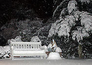Rockville Centre, New York, U.S.  2003. Singapura cat sits on snowy mound next to bench in backyard as it's snowing at night.