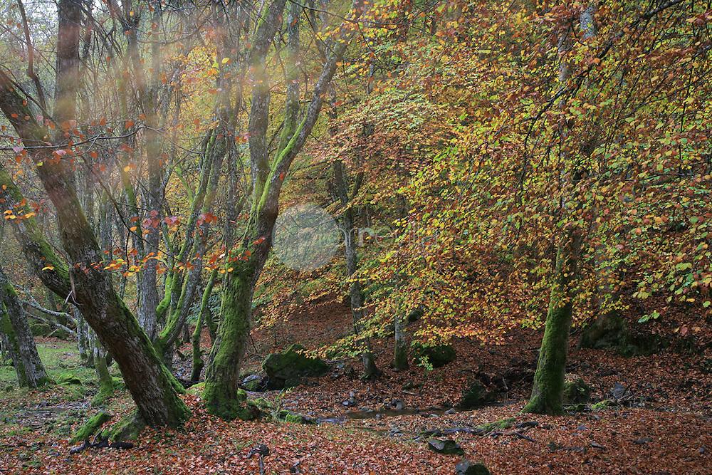 Valle de Valvanera. La Rioja ©Daniel Acevedo / PILAR REVILLA