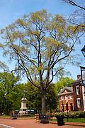 Historic Court Square, downtown Charlottesville Virginia.