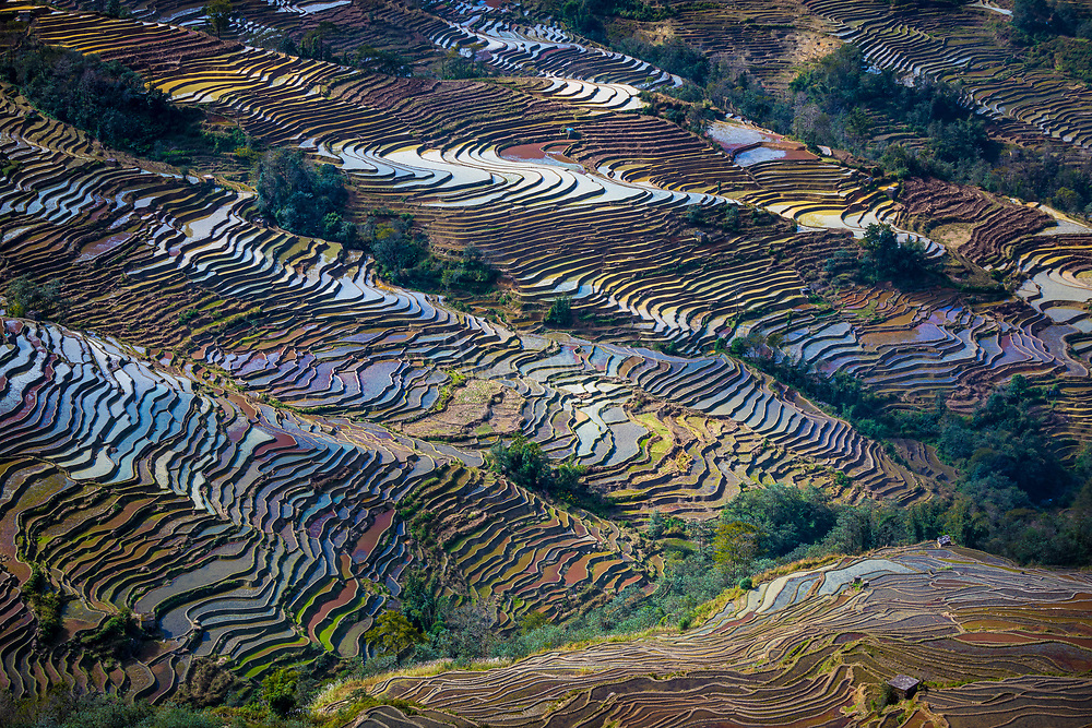 Yuanyang County (simplified Chinese: 元阳县; traditional Chinese: 元陽縣) is located in Honghe Prefecture in southeastern Yunnan province, China, along the Red River. It is well known for its spectacular rice-paddy terracing. Part of the area now forms the 45th World Heritage Site in China.