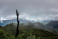 Landscape of burned forest and regrowth on Mt. Fansipan, Lao Cai Province, Vietnam, Southeast Asia