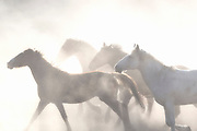 DONOMA MEANS 'SIGHT OF THE SUN' IN OMAHA.<br /> <br /> THIS IMAGE SYMBOLIZES THE ETHEREAL NATURE THAT THE WILD MUSTANG CAPTURES SO HONESTLY.  THE  SHADOWS AND RAYS OF LIGHT RISING UP THROUGH THE DANCING DUST CREATES THE POETIC NATURE OF THESE HORSES RACING TOWARDS THE SUN IN SEARCH FOR FREEDOM.
