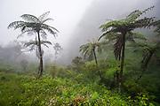 Sri Lanka, Horton Plains