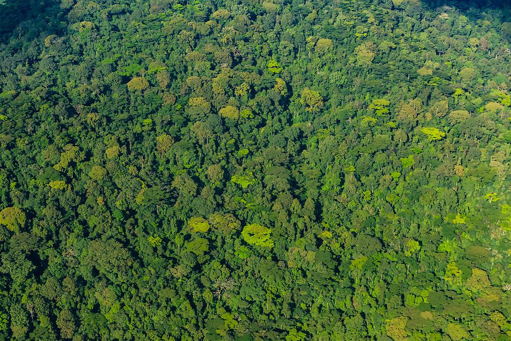 Aerial view of dense forest in southwest Uganda.