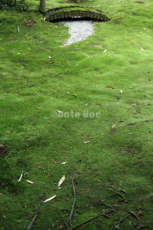 a with fresh green moss covered ground garden Kyoto Japan