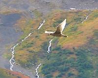 Gull. Spencer Glacier, Alaska. Image taken with a Nikon D300 camera and 18-200 mm VR lens.
