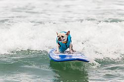 July 29, 2017 - Imperial Beach, CA, US - Surfdog returns to Imperial Beach for the twelfth  year...Tristan surfing. (Credit Image: © Daren Fentiman via ZUMA Wire)