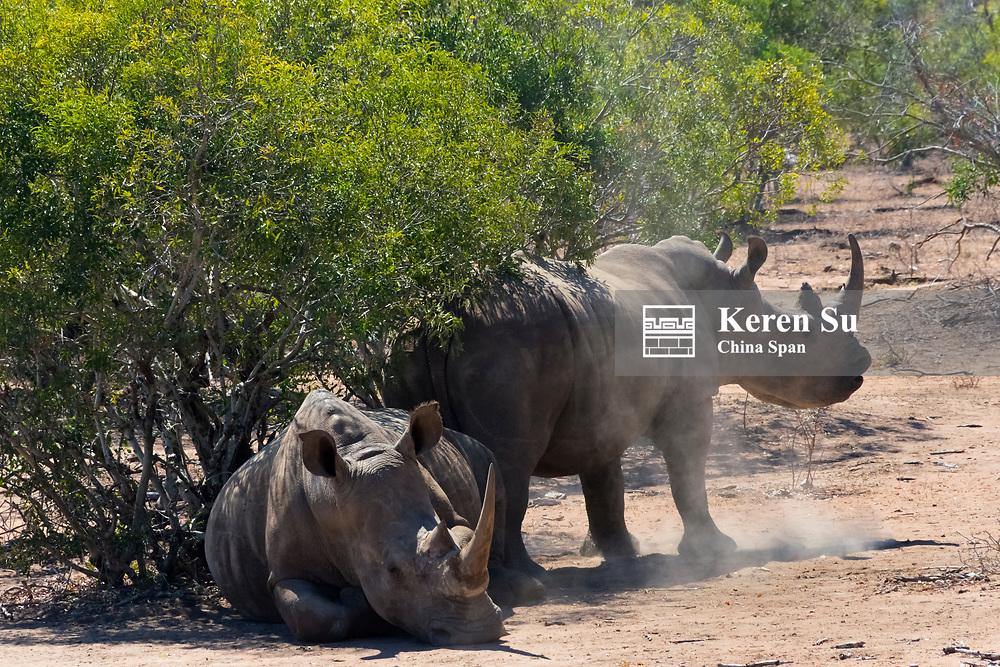 White Rhinos at Mkhaya Game Reserve, Swaziland