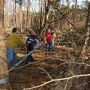 Bomen opruimen St. Naardickland Spanderswoud Hilversum