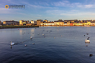 Swans at The Claddagh at the River Corrib in Galway, Ireland