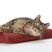 20110515 JJ Cats