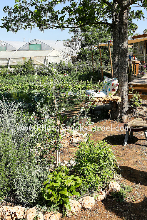 small Organic vegetable patch