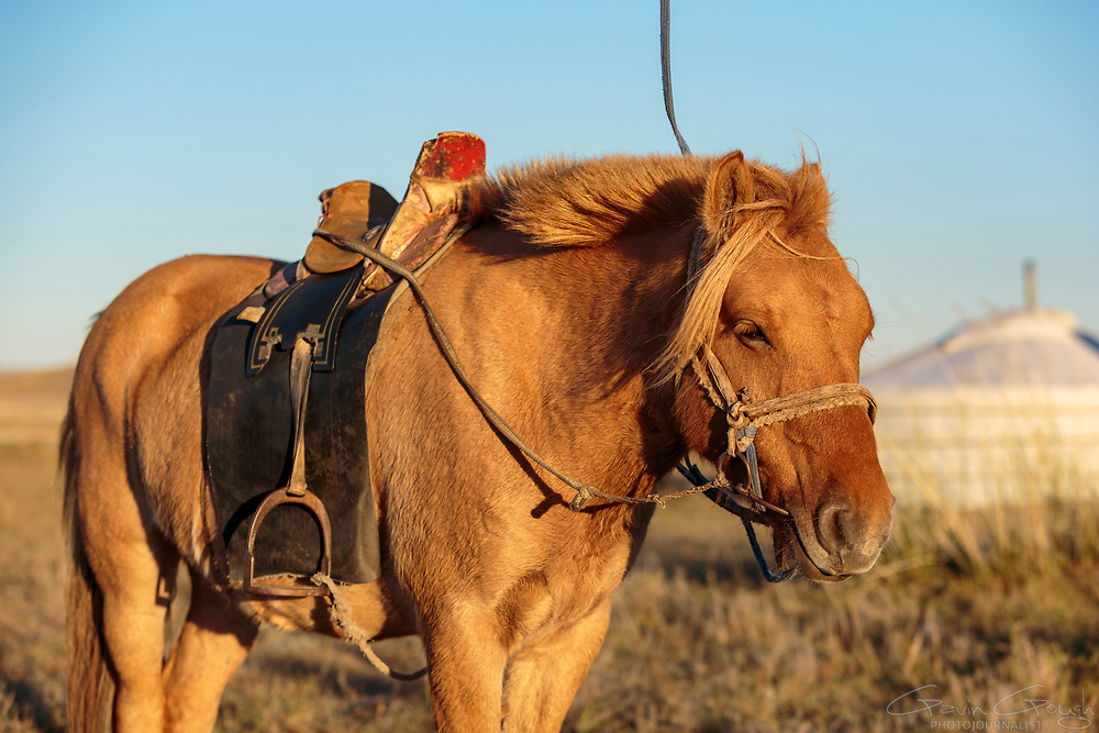The horse is still the preferred mode of transport for Mongolian nomad families, especially over shorter distances.