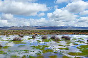 Vernal Pool and Clouds, Carrizo Plain National Monument, California