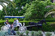 Tourist sightseeing on horse drawn carriage ride, Hamilton, Bermuda