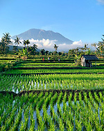 Local Balinese children walk home through the rice paddies from a soccer game as the towering volcano Mt. Agung rises from the clouds.