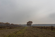 A lone tree sits in a Polish field, Autumn 2014