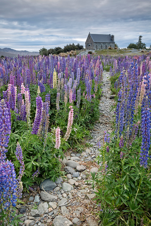 If you're going to church this weekend, here's the road to take! Or better yet, maybe a church day outside amongst the beautiful lupins and calm skies!