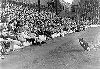 """The Liverpool """"Kop"""", revel at a cat which ran the full length of the pitch. Liverpool v Asenal 22/8/64. Credit: Colorsport"""