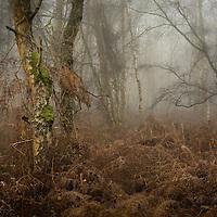 A bit of woodland. Surprisingly