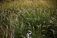 A Magellanic Penguin sleeps in the tall grass on the Isla Martillo near Estancia Harberton and Ushuaia, Argentina. The island is the home of one of the largest penguin rookery in Tierra del Fuego.