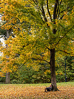 Central Park, Oct. 27, 2020.