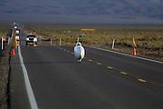 Alex Selwa in de Vortex tijdens de tweede westrijddag van de WHPSC. In Battle Mountain (Nevada) wordt ieder jaar de World Human Powered Speed Challenge gehouden. Tijdens deze wedstrijd wordt geprobeerd zo hard mogelijk te fietsen op pure menskracht. Ze halen snelheden tot 133 km/h. De deelnemers bestaan zowel uit teams van universiteiten als uit hobbyisten. Met de gestroomlijnde fietsen willen ze laten zien wat mogelijk is met menskracht. De speciale ligfietsen kunnen gezien worden als de Formule 1 van het fietsen. De kennis die wordt opgedaan wordt ook gebruikt om duurzaam vervoer verder te ontwikkelen.<br /> <br /> Alex Selwa in the Vortex on the second day of the WHPSC. In Battle Mountain (Nevada) each year the World Human Powered Speed ??Challenge is held. During this race they try to ride on pure manpower as hard as possible. Speeds up to 133 km/h are reached. The participants consist of both teams from universities and from hobbyists. With the sleek bikes they want to show what is possible with human power. The special recumbent bicycles can be seen as the Formula 1 of the bicycle. The knowledge gained is also used to develop sustainable transport.