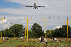 © Licensed to London News Pictures. 29/07/2015. Heathrow, UK. An aircraft coming in to land over a field and horses at Heathrow airport. There has been a long running dispute over the expansion and extension of a third runway at the UK's largest airport. A recent report by the Airports Commission recommended that a third runway be built at Heathrow ahead of plans to build a new airport or expand Gatwick. Photo credit : Ian Wylie/LNP