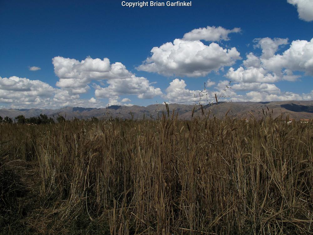 A field in Cusco Peru