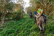 Early morning elephant ride on elephants through the elephant grass, Unesco world heritage site, Kaziranga National Park, Assam, India