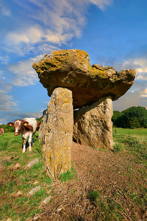 The megalithic St Lythans burial chamber, in Welsh siambr gladdu Lythian Sant, part of a long Neolithic chambered long barrow built about 6000 years ago. Near St Lythans, Vale of Glamorgan, Wales .<br /> <br /> Visit our WALES HISTORIC PLACES PHOTO COLLECTIONS for more photos to browse or download or buy as prints https://funkystock.photoshelter.com/gallery-collection/Images-of-Wales-Welsh-Historic-Places-Pictures-Photos/C0000UEicBhu1tQM<br /> .<br /> Visit our PREHISTORIC PLACES PHOTO COLLECTIONS for more  photos to download or buy as prints https://funkystock.photoshelter.com/gallery-collection/Prehistoric-Neolithic-Sites-Art-Artefacts-Pictures-Photos/C0000tfxw63zrUT4