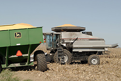 29 October 2006:  Corn can be seen rising from the hopper of this Gleaner combine and farm wagon. Rural McLean County, Illinois.<br />