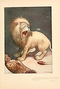 An insect sting and a lion From the book Mr. Munchausen; being a true account of some of the recent adventures beyond the Styx of the late Hieronymus Carl Friedrich, sometime Baron Munchausen of Bodenwerder, as originally reported for the Sunday edition of the Gehenna Gazette by its special interviewer the late Mr. Ananias formerly of Jerusalem and now first transcribed from the columns of that journal. by Bangs, John Kendrick, (1862-1922) Published in Boston by Noyes, Platt & company 1901 with artwork by Peter Newell