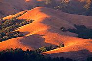 Sunset light on oak and grass hills of Briones Regional Park, near Orinda, Contra Costa County, CALIFORNIA