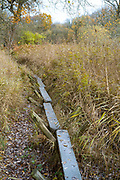 Replica of The Sweet Track - ancient trackway constructed in Neolithic times crossing Avalon Marshes reed swamp with poles driven into peat, Somerset, UK