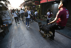 Police officers dogs stand in the streets of Istanbul, Turkey on July 1, 2018, after Turkish authorities banned the annual Gay Pride Parade for a fourth year in a row. Around 1,000 people gathered on a street near Istiklal Avenue and Taksim Square. Police warned activists to disperse but used rubber bullets against some who tried to access Istiklal Avenue. Photo by Depo Photos/ABACAPRESS.COM