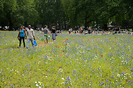 Wildflower meadow, full of native and non-native, annual and perennial wild flowers planted in an urban park, London Fields, Hackney, London UK July