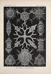 Kunstformen der Natur<br /> Leipzig und Wien :Verlag des Bibliographischen Instituts,1899-1904.<br /> https://biodiversitylibrary.org/page/47388453