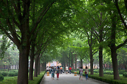 "Tree lined (with Ginko trees) entrance avenue at Yonghe Temple, also known as the ""Palace of Peace and Harmony Lama Temple"", the ""Yonghe Lamasery"", or - popularly - the ""Lama Temple"" is a temple and monastery of the Geluk School of Tibetan Buddhism located in the northeastern part of Beijing, China. It is one of the largest and most important Tibetan Buddhist monasteries in the world. The building and the artworks of the temple is a combination of Han Chinese and Tibetan styles."