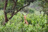 South Africa Nature